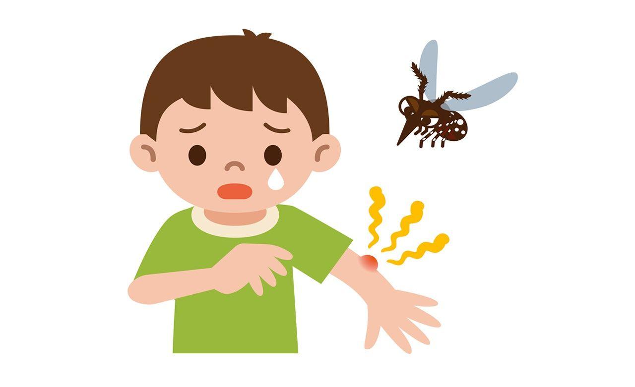 Comment soulager les piq res de moustiques - Soulager piqure de moustique ...