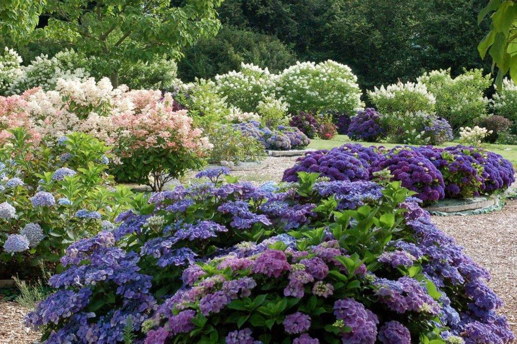 Jardin shamrock le paradis normand des hortensias for Recherche entretien jardin