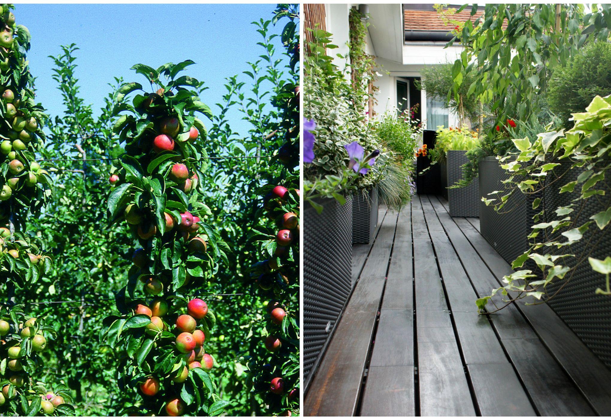Cultiver un verger sur son balcon c 39 est possible - Faire un jardin sur son balcon ...