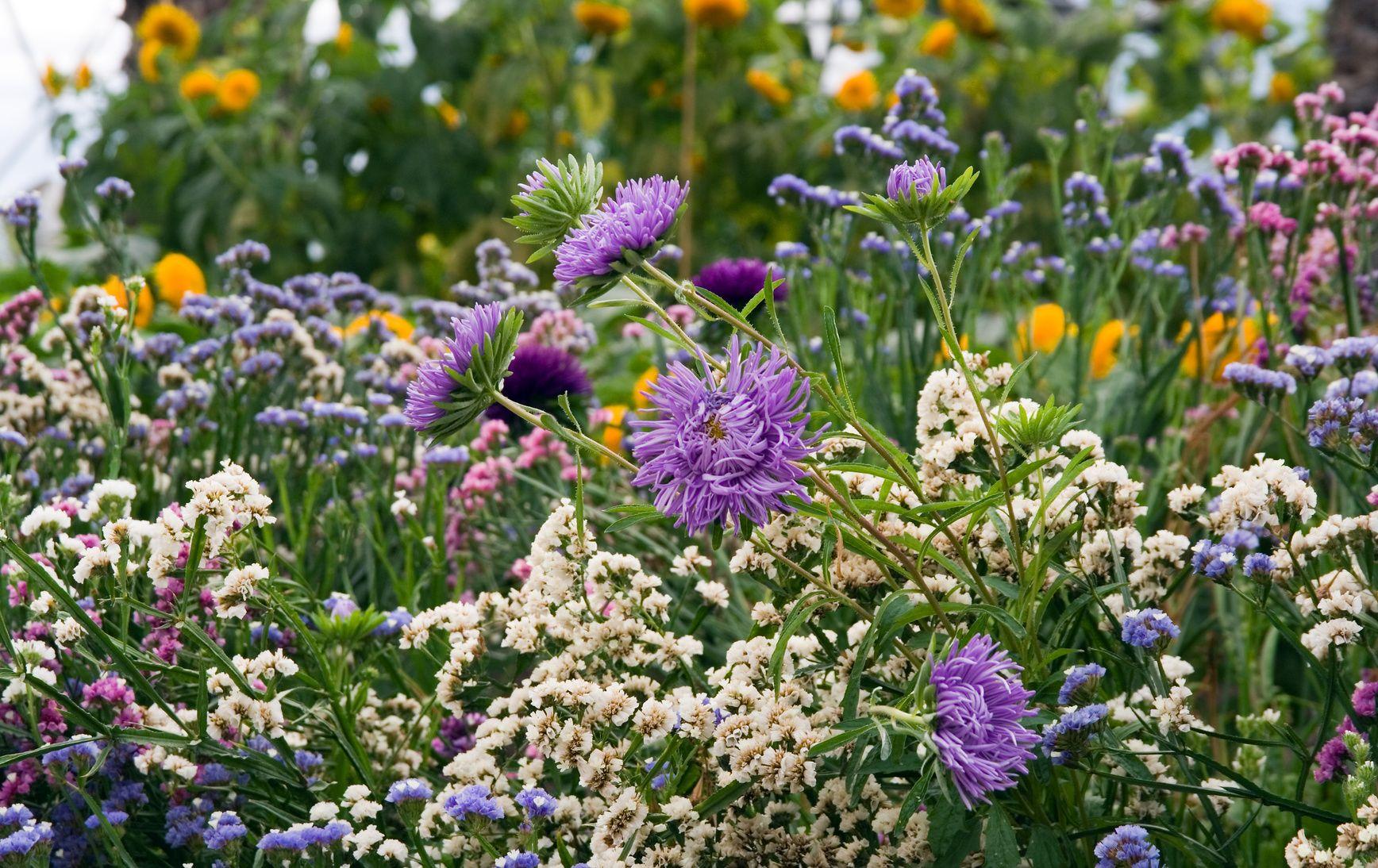 comment faire fleurir votre jardin neuf mois sur douze. Black Bedroom Furniture Sets. Home Design Ideas