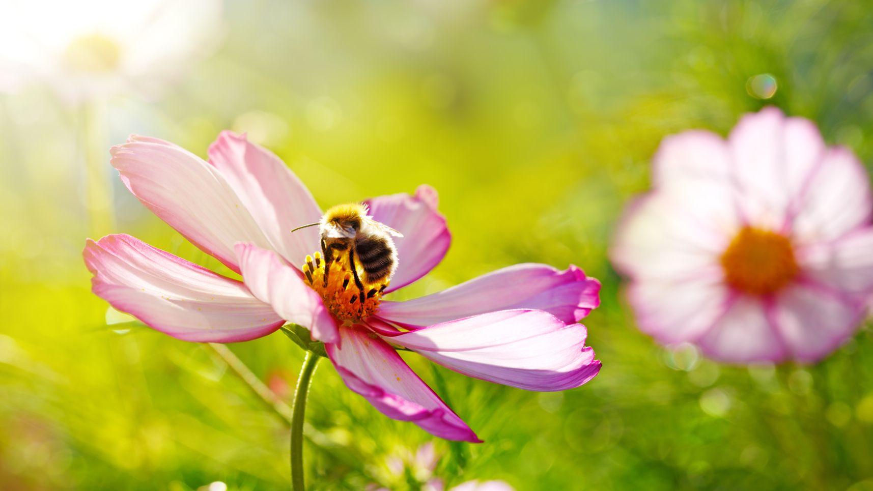 Jardin un milliard de fleurs semer pour les abeilles - Fleurs coupees en gros pour particulier ...