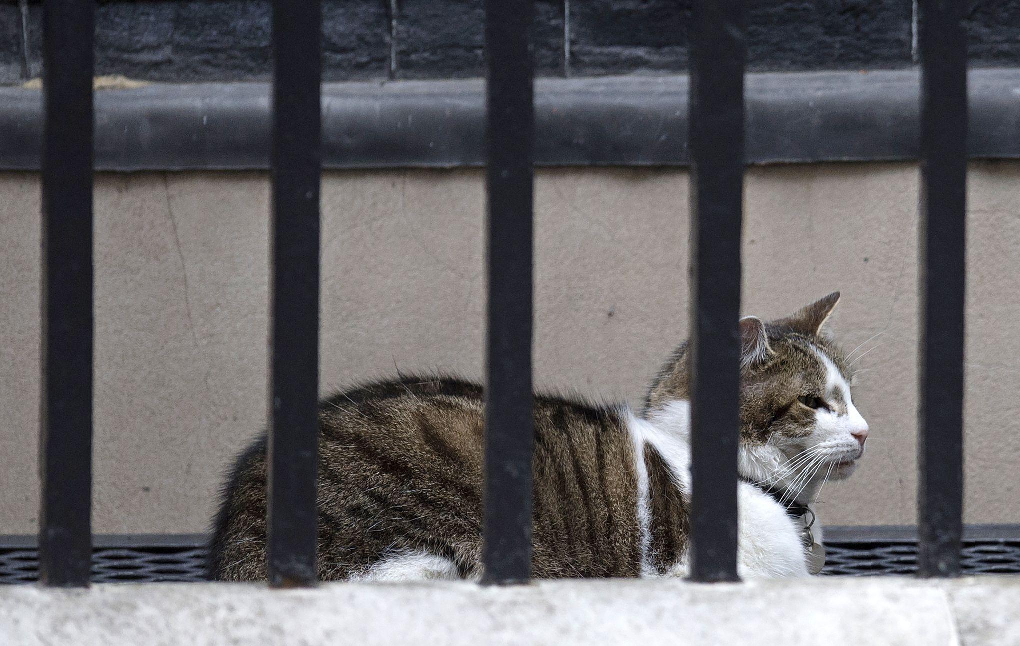 toxoplasmose symptômes chat