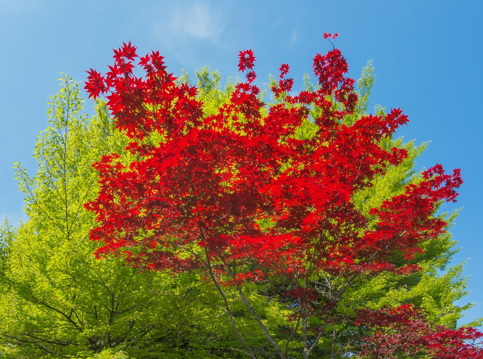 Jardin les feuilles mortes s 39 amassent la pelle for Jardin 7 17
