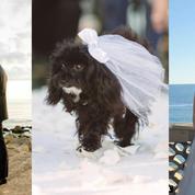 Un jardin à Malibu, Jennifer Lawrence, des caniches d'honneur : les dessous du mariage d'Amy Schumer