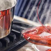 En Suisse, les homards ne sont plus ébouillantés vivants