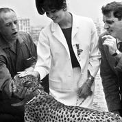 Retour sur... le guépard qui rôdait sur la plage de Cannes