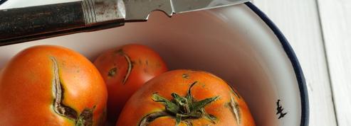 Est-ce encore possible de manger des tomates qui ont du goût ?