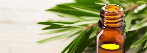 Acné, peau grasse, bouton de fièvre... Comment utiliser l'huile essentielle d'arbre à thé