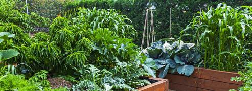 Le jardin partagé, une idée qui fait son chemin