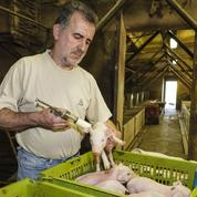Le porc espagnol s'impose en Europe