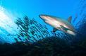 Une plage d'Arcachon évacuée en raison de la présence d'un requin