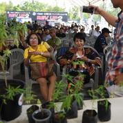 Thaïlande: première fête du cannabis