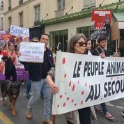 EN IMAGES - «Fermons les abattoirs!»: défilé à Paris contre la maltraitance animale