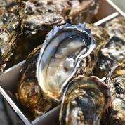 Huîtres: inquiétude pour l'appellation Marennes-Oléron après une décision de justice