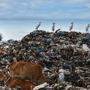 L'Indonésie renvoie cinq conteneurs de déchets aux États-Unis