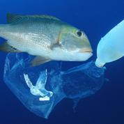 Les pays d'Asie du Sud-Est tentent de s'unir contre la pollution des océans