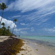 Un rapport pointe «la dégradation généralisée» de l'eau en Guadeloupe