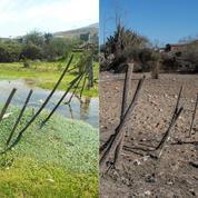 Animaux morts, pénuries d'eau, agriculteurs en difficulté... Au Chili, la sécheresse frappe de plein fouet