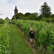 Viticulture: la France va renoncer à 40 millions d'euros d'aides européennes