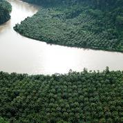 L'Assemblée fait marche arrière sur l'huile de palme en maintenant son exclusion des biocarburants