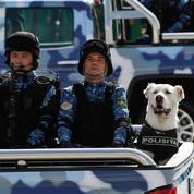 Au Turkmenistan, un chien élevé au rang de symbole national