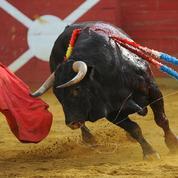 Les Français opposés au maintien des corridas avec mises à mort