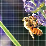 La danse du ventre des abeilles