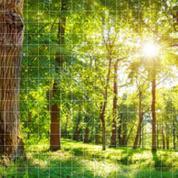 La vie «sociale» des arbres