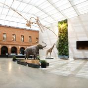 Trésors des musées de province: voyages au long cours à Toulouse