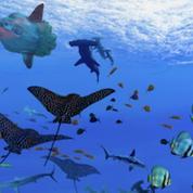Trésors des musées de province : Nausicaa, vingt mille lieues sous les mers