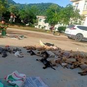 Vietnam: un couple arrêté pour avoir empoisonné des dizaines de chiens et de chats