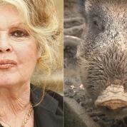 Brigitte Bardot en première ligne pour sauver Maurice le sanglier
