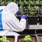 Cannabis: une vingtaine d'élus de tous bords réclament la «légalisation»