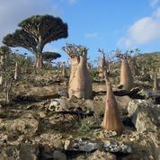 Yémen: les séparatistes prennent le contrôle de l'île stratégique de Socotra