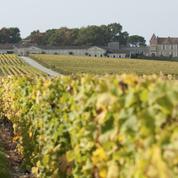 Œnotourisme : à Bordeaux, une autre facette du Sauternais