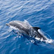 L'État condamné pour la prise accidentelle de dauphins