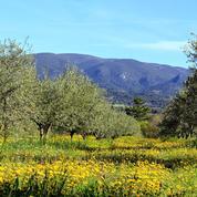 Du Luberon à Hyères, cinq adresses dans le sillage de l'huile d'olive en Provence