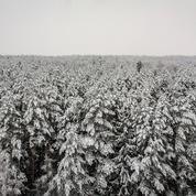 La récente canicule en Sibérie aurait été «presque impossible» sans le changement climatique