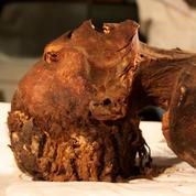 Les égyptologues ont enfin découvert le secret de la «momie hurlante»