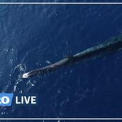 WWF dénonce «l'agonie» d'une baleine blessée par l'Homme