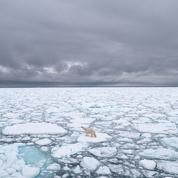 Arctique: le Svalbard norvégien enregistre un record de chaleur