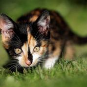 Après le confinement, la SPA croule sous l'afflux de chatons