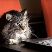 De mystérieuses cyberattaques «Meow» effacent intégralement des bases de données