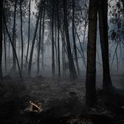 Incendie en Gironde: plus d'évolution du feu, surveillance continue