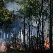 Feux de forêts : vigilance accrue après les premiers incendies et l'arrivée des fortes chaleurs