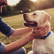 Une proposition de loi pour améliorer le bien-être animal