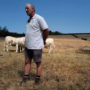 Face aux sécheresses à répétition, les agriculteurs s'inquiètent