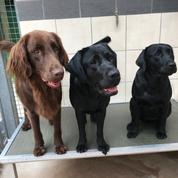 À l'école des chiens guides de Paris, difficile de rattraper le retard lié au confinement