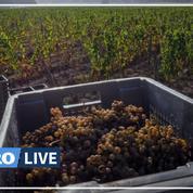 Covid-19 : le gouvernement rallonge le plan d'aide aux viticulteurs de 76 millions d'euros