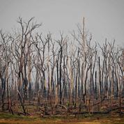Brésil: plus de 1600 km2 déboisés en Amazonie en juillet
